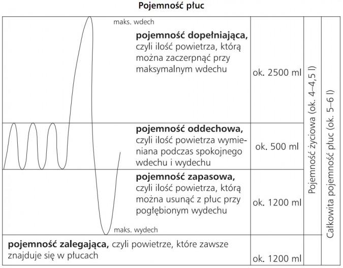 Pojemność płuc. Maks. wdech, maks. wydech. Całkowita pojemność płuc (ok. 5-6 l), pojemność życiowa (ok. 4-4,5 l). Pojemność dopełniająca, czyli ilośc powietrza, którą można zaczerpnąć przy maksymalnym wdechu (ok. 2500 ml). Pojemność oddechowa, czyli ilość powietrza wymieniana podczas spokojnego wdechu i wydechu (ok. 500 ml). Pojemność zapasowa, czyli ilość powietrza, którą można usunąc z płuc przy pogłębionym wydechu (ok. 1200 ml). Pojemność zalegająca, czyli powietrze, które zawsze znajduje się w płucach (ok. 1200 ml).