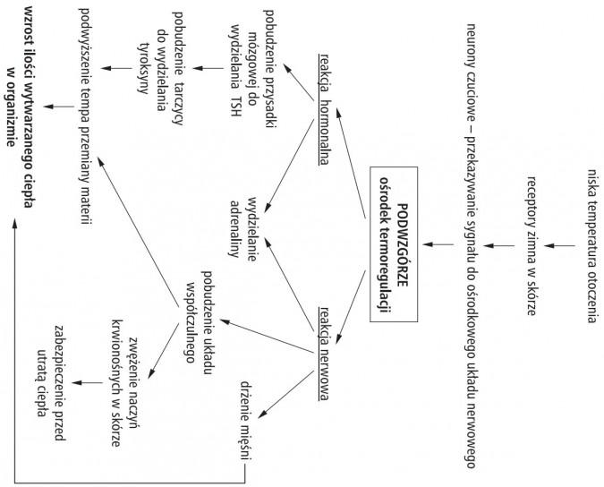 Termoregulacja Niska Temperatura Otoczenia Receptory