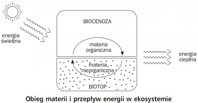 static3.opracowania.pl/images/187531/obieg_materii_i_przep%C5%82yw_energii_w_ekosystemie.jpg